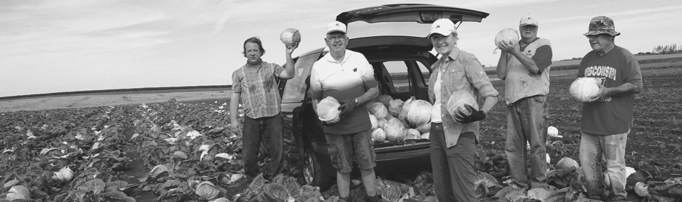 a group of volunteers standing in a field holding cabbage, harvesting it